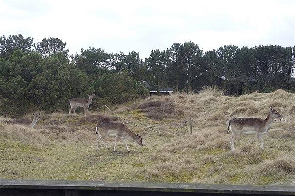 Sommerhus, 28-4177
