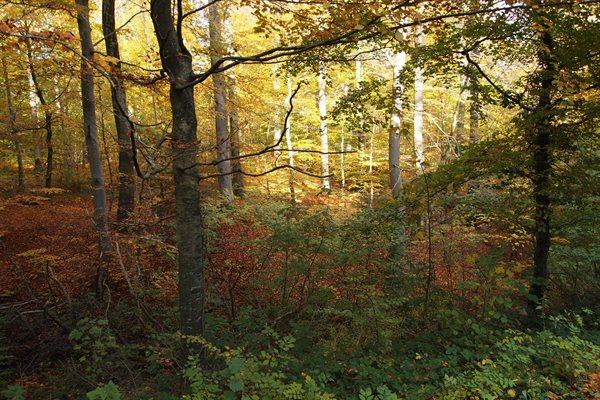 Sommerhus, 61-5108
