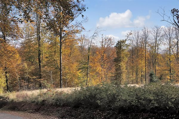 Sommerhus, 61-5109