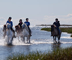 Erleben Sie die schöne Natur Läsös vom Pferderücken