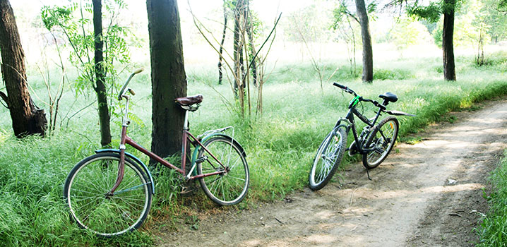 To cykler parkeret ved en sti i en skov
