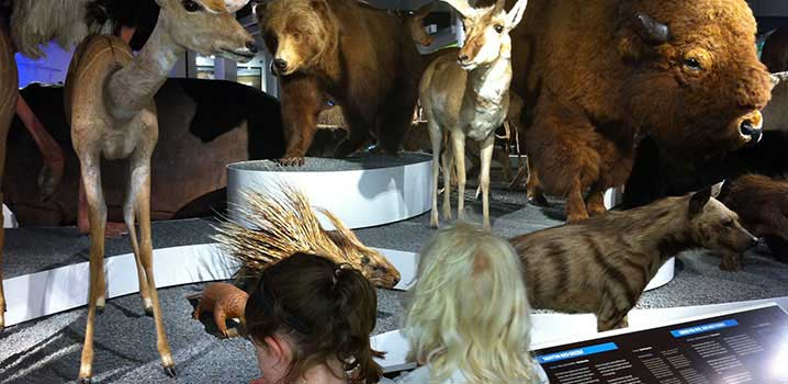 Børn ser på udstilling med udstoppede dyr / Naturhistorisk Kunstmuseum
