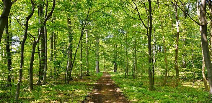 Nature, Denmark