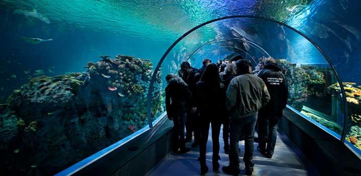 Zoos, Danmark