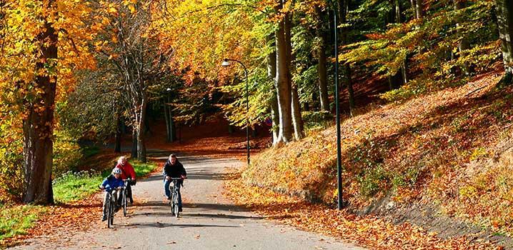 efteraar_skov_familie_cykler_new