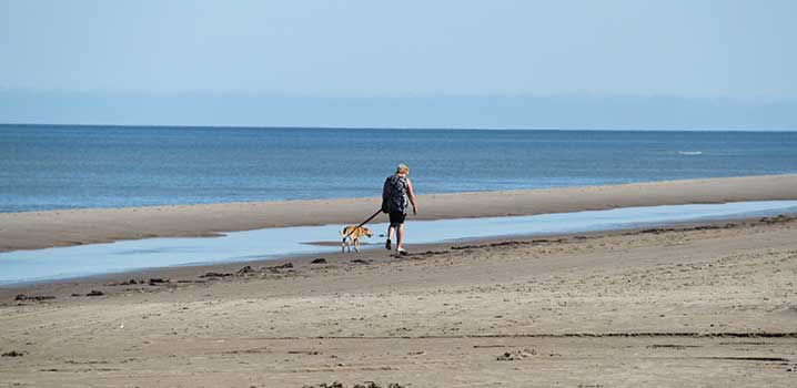 Bring your dog to Skagen and enjoy lovely walks in the beautiful nature