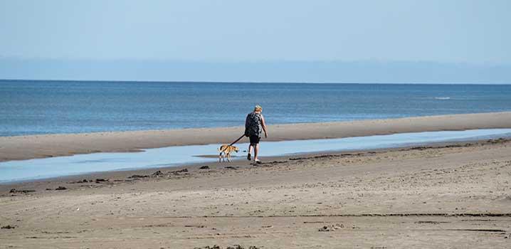 Nehmen Sie den Hund mit nach Skagen und genießen Sie Spaziergänge in der schmucken Natur