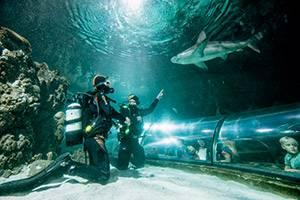 Dykkere ved hajerne