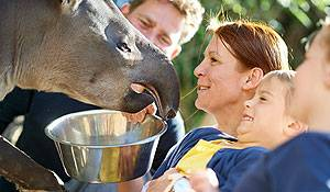 top 10 pornostjerner rabat til Odense Zoo