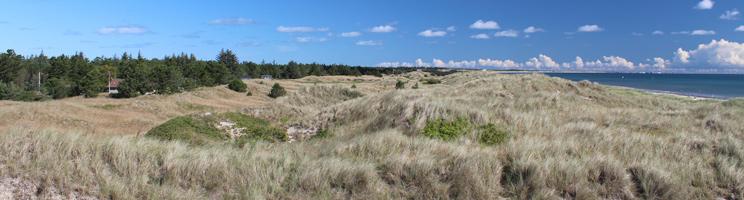 Ferienhäuser in grüner Umgebung hinter den Dünen und dem Strand im Urlaubsgebiet Ålbæk