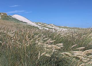 De høje klitter, som afskærmer sommerhusområdet i Bjerregård