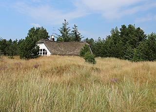 Sommerhusene i Blåvand, Mosevrå ligger ugenert u den smukke natur