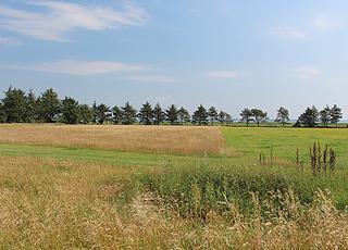 Grønne omgivelser med marker og træer mellem sommerhusene og vandet i Mosevrå