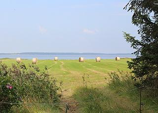 Nyhøstet mark mellem sommerhusområdet og vandet i Mosevrå