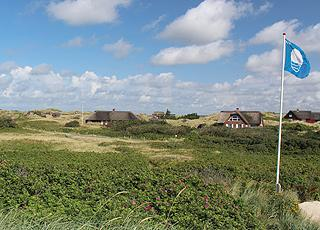 Holiday homes with thatched roofs in the hilly dune landscape behind the beach in Blåvand