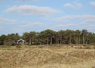 Sommerhusene i Bunken ligger ugenert i de grønne omgivelser bag stranden