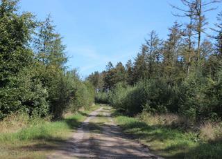 Dejbjerg er omgivet af skønne skovområder