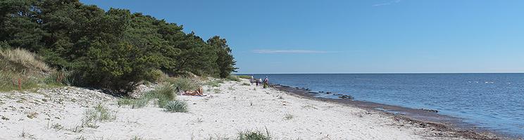 Skoven strækker sig helt ned til den hvide sandstrand i sommerhusområdet Dueodde Ferieby