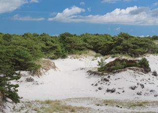 Imponerende klitområde mellem stranden og sommerhusene i Dueodde