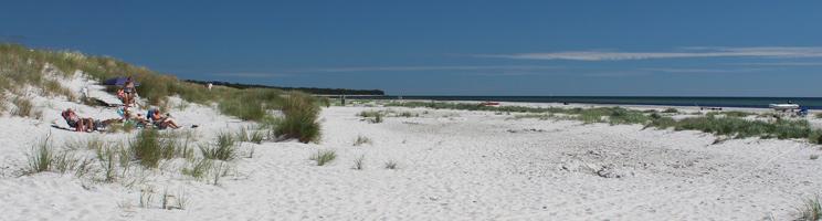 Badegæster slapper af i klitterne på den brede sandstrand i ferieområdet Dueodde
