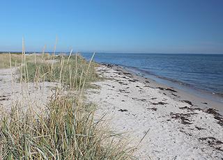 Fin sandstrand med små marehalmsklitter og lavt badevand ved Dyngby