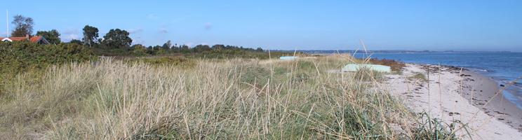 Sommerhusene i Dyngby ligger bag stranden og et grønt naturområde