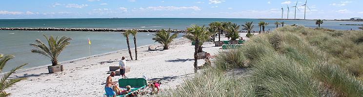 In Frederikshavn können Sie den weißen Palmenstrand mit Palmen genießen
