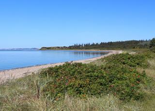 Eine der schönen Buchten der Insel Fur mit einem Strand, klarem Wasser und üppiger Natur