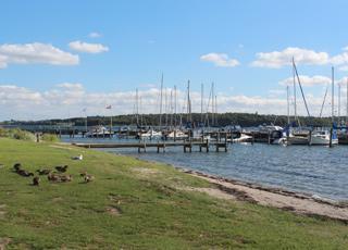Ænder på de grønne arealer ved den hyggelige lystbådehavn i Genner Strand