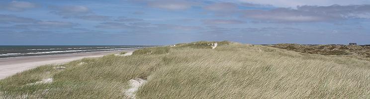 Mellem Vesterhavet og sommerhusene i Grærup ligger et smukt og kuperet klitområde