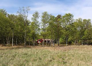 Die Ferienhäuser in Helberskov sind von Wald und einer Plantage umgeben