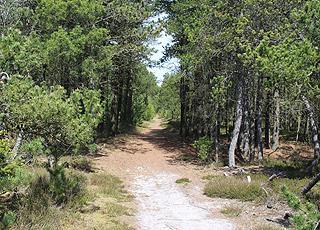 Sie können mehreren Wanderwegen durch das Waldgebiet mit Ferienhäusern in Helberskov folgen