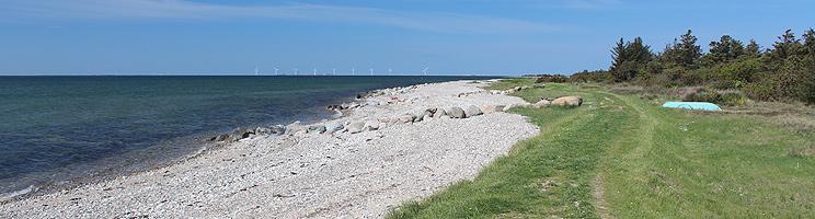 Langer Badestrand und Grünflächen mit Wald bei den Ferienhäusern in  Helligsø
