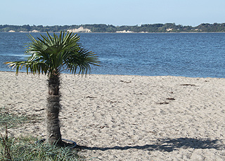 Den fine sandstrand med palmer i Hvalpsund