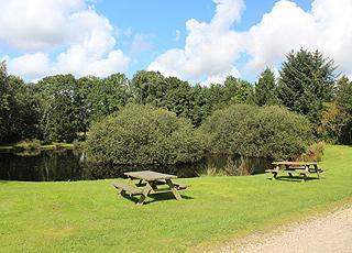Grønne, rekreative omgivelser omkring søen i Jegum Feriepark