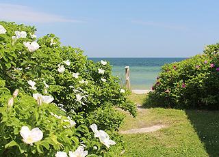 Sti til stranden mellem sommerhusene i Jørgensø