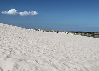 Die großen Sanddünen in Råbjerg Mile hinter der Küste bei Kandestederne