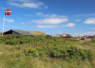 Hyggelige sommerhuse i grønne og kuperede klitlandskaber bag stranden i Klegod