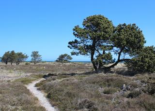 Zwischen den Ferienhäusern und dem Strand von Nordmarken finden Sie dieses schöne Naturgebiet