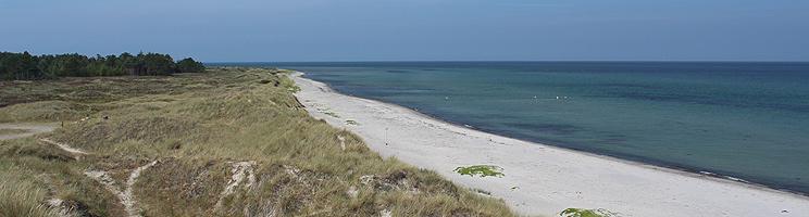 Der schöne Sandstrand mit Dünen bei Hvide Bakker, dicht am Ferienhausgebiet Nordmarken auf Læsø