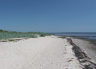 Kysten langs sommerhusområdet Louns i Louns BredningFin sandstrand ved sommerhusområdet Louns