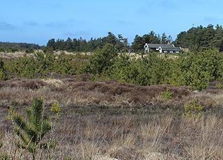 Sommerhus i naturskønne omgivelser bag kysten i Lyngby, Thy