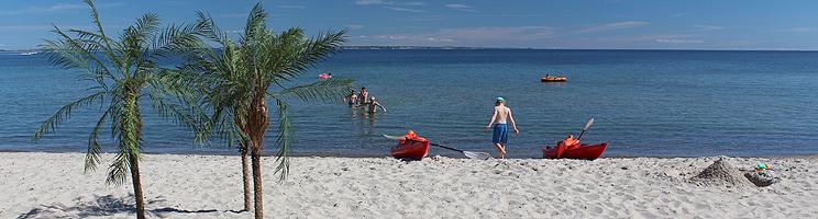 Små palmer på den hvide sandstrand i sommerhusområdet Mommark