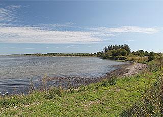 Die Ferienhäuser in Mou liegen von Wald umgeben und zum Limfjord hinaus
