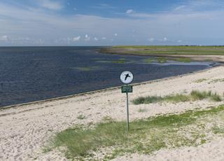 Vadehavskysten i Havneby er udlagt som vildtreservat