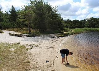 En lille sandstrand ved en sø i Kirkeby Plantage ved Kongsmark på Rømø