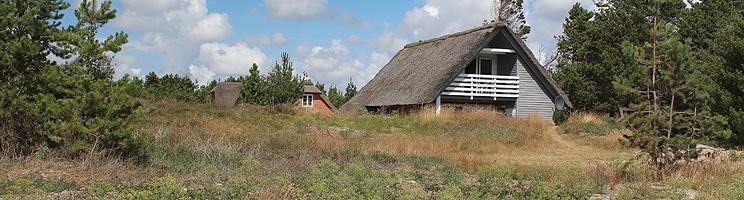 Sommerhusene i Toftum ligger i kuperede skovomgivelser, tæt ved Rømøs brede sandstrand