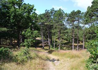 De smukke plantager omkring Rømø, Vesterhede indeholder mange vandrestier