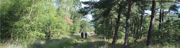 Rømø, Vesterhede er beliggende i naturskønne omgivelser med plantage og klithede