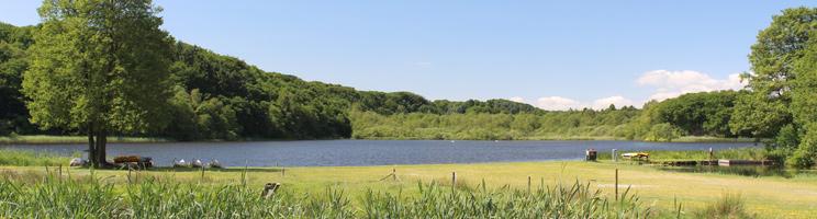 Den idylliske Rørbæk Sø er omgivet af grøn og kuperet natur